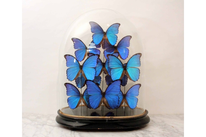 Butterfly Glass Dome