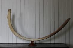 Sculptural Whale Rib